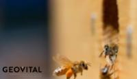 Negatywny wpływ promieniowania elektromagnetycznego na faunę i florę, a w szczególności na owady, przyniesie szkodę nam wszystkim.