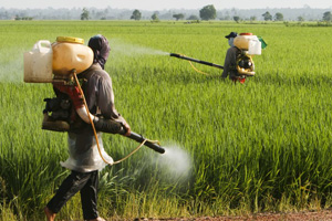 Pestycydy w środowisku (©123rf.com)