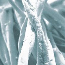 Włókno bawełniane